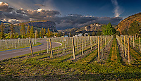 Fine Art Landscape Photograph of Mcintyre Bluff and Jackson Triggs Vineyard near Oliver British Columbia Canada.
