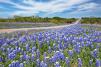 On a not-so-often traveled path in the Texas Hill Country, this stretch of highway sometimes offers amazing views of bluebonnets that roll and curve with road all the way to the horizon.