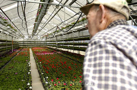 Davis County project. Joe Thorson, owner of Joe's Greenhouse, which he opened in 1950. 04/05/2005<br />