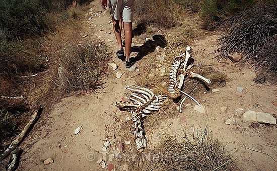 People walk past the skeleton of a deer on a Native American river trip through Lodore Canyon and Dinosaur National Monument.<br />