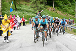 The peleton, with Luis Leon Sanchez (ESP) Astana Pro Team on the front, climb during Stage 14 of the 2018 Giro d'Italia, running 186km from San Vito al Tagliamento to Monte Zoncolan features Europe's hardest climb, Italy. 19th May 2018.<br /> Picture: LaPresse/Fabio Ferrari | Cyclefile<br /> <br /> <br /> All photos usage must carry mandatory copyright credit (&copy; Cyclefile | LaPresse/Fabio Ferrari)
