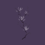 Elegant tree branch of magnolia flowers blossom Japanese Zen painting based artistic design illustration isolated on dark purple background