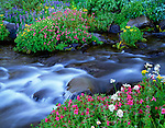 Mount Rainier National Park, WA <br /> Pink monkey-flower, lupine, groundsel, and valerian blooming  along the flowing waters of the Paradise River