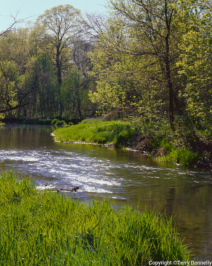 Franklin Creek State Park, IL: Sun reflecting on Franklin Creek in early spring