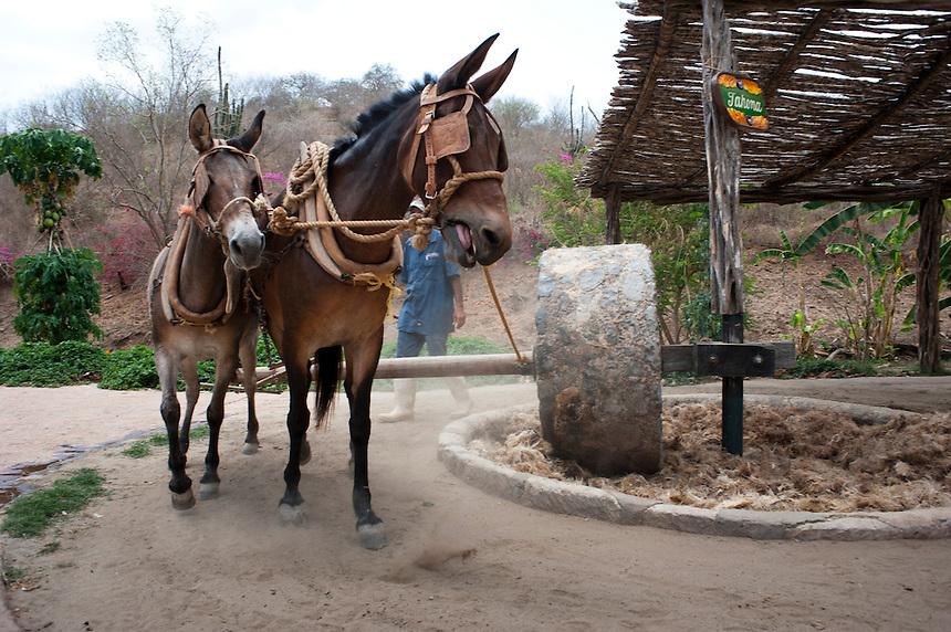 Los Osuna tequila hacienda, Sinaloa, Mexico. Aromas y Sabores with Chef Patricia Quintana