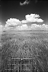 1998-Glen Wilsey's airboat runs over the sawgrass of the Everglades. The Florida Everglades are a disappearing world. Overpopulation, the sugar and cattle industry, mismanagement of the land, droughts and bush fires are just a few of the problems the Florida Everglades are facing. Here Glen Wilsey driving his airboat. According to Glen the best thing about being a tour guide in the everglades is driving the airboats. Riding an airboat is fun but driving an airboat is an awesome feeling.