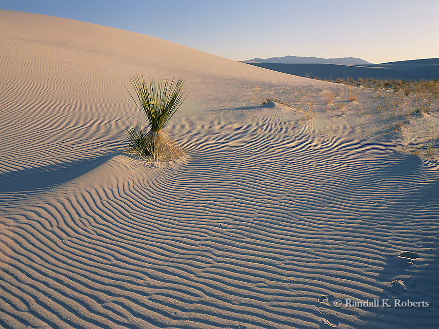 Yucca and waves of sand, White Sands National Monument, New Mexico