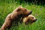 Brown bear and cub, McNeil River Bear Sanctuary, Alaska