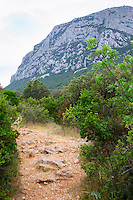 The Pic St Loup mountain top peak. Pic St Loup. Languedoc. Garrigue undergrowth vegetation with bushes and herbs. France. Europe.