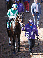 DEL MAR, CA - NOVEMBER 04: Bar of Gold #5, ridden by Irad Ortiz Jr., walks in the paddock before the Breeders' Cup Filly & Mare Sprint race on Day 2 of the 2017 Breeders' Cup World Championships at Del Mar Racing Club on November 4, 2017 in Del Mar, California. (Photo by Kazushi Ishida/Eclipse Sportswire/Breeders Cup)