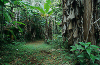 Trail with Banana Trees,La Hacienda Juanita, Maricao State Forest, Puerto Rico, USA, February 2003