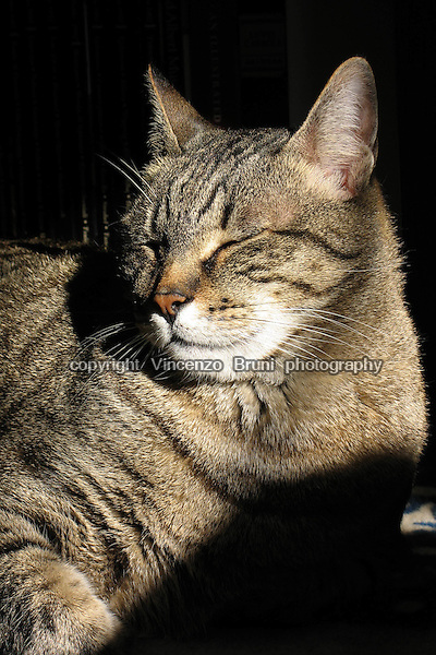 Portrait of a brown tabby cat hit by sun light.