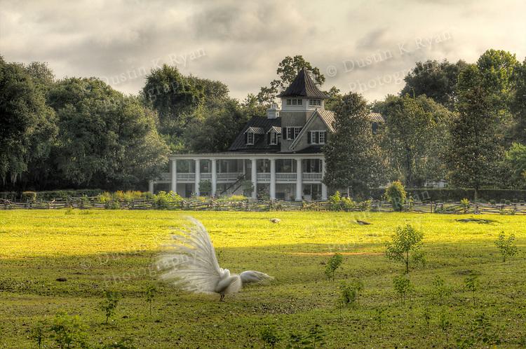 Magnolia Plantation Gardens and Cypress Swamp Charleston South Carolina Peacock Bird
