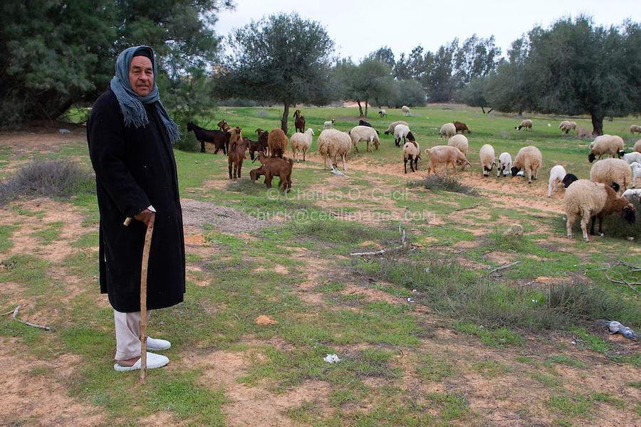 Tripoli, Libya - Shepherd Ali Muhammad and Sheep