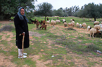 Tripoli, Libya - Shepherd Ali Muhammad and Sheep