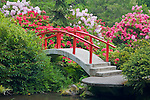 Seattle, WA<br /> Kubota Garden city park, Moon Bridge surrounded by blooming rhododendron, arches over pond on Mapes creek