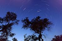 Star trails, Southern Utah