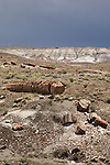 Dark clouds over a petrified log and the landscape of Petrified Forest National Park in Arizona, United States of America