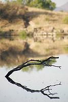 Represo del Rancho ¬Los  Fresnos¬que es una de las proncipales fuentes de vida y produccion natural del alimento de las aves residentes del lugar y las migratorias .<br />.<br />La Cuenca del R'o San Pedro en  Sonora aporta a la  Biodiversidad del Rancho Los Fresnos, dicha cuenca es hist—ricamente reconocida por ser un corredor natural de mas de 200 espacies de aves.