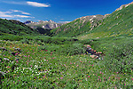 July 26, 2016 - Aspen, Colorado, U.S. -  Late July hiking is an exceptional experience during the height of wildflower season along the Lost Man Trail in the Hunter-Fryingpan Wilderness Area near Aspen, Colorado.