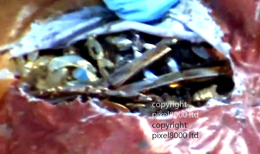 Pic shows: Police video of uncovering buried bag of jewels stolen in Hatton Garden raid . They were hidden in a grave in Edmonton, London.<br /> <br /> video shows forensics experts from the police team who tracked down the veteran gang leafing through a Sainsbury's bag for life which was stuffed with some of the huge haul of jewellery and gems which was taken from the underground vault in London last Easter<br /> <br /> <br /> Picture by  Pixel8000 07917221968