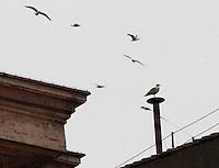 ROMA 13/03/2013 .CARDINAL JORGE MARIO BERGOGLIO ELETTO  PAPA FRANCESCO. FOTO CIRO DE LUCA
