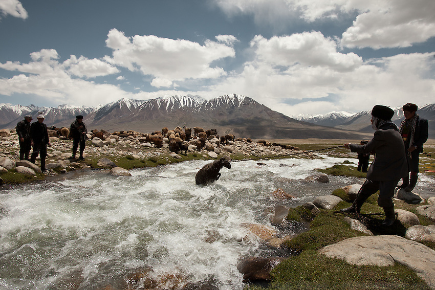 At the wedding celebration at Kitshiq Aq Jyrga, Kyrgyz men are passing sheep over a river...Trekking through the high altitude plateau of the Little Pamir mountains (average 4200 meters) , where the Afghan Kyrgyz community live all year, on the borders of China, Tajikistan and Pakistan.