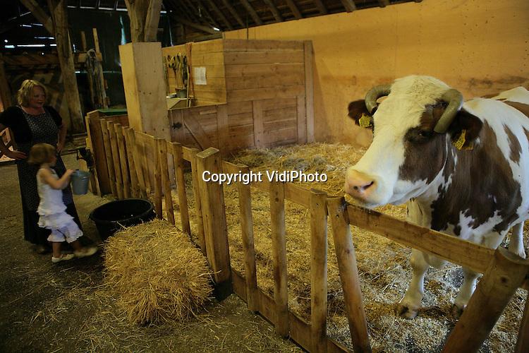 Foto: VidiPhoto..ARNHEM - Knuffelkoe Corrie (18) is razend populair bij de bezoekers van de kinderboerderij in het Nederlands Openluchtmuseum in Arnhem. Begin dit jaar overleed in Doetinchem Anna Reintjes op 96-jarige leeftijd. Ze had nog twee koeien. De kerk kreeg haar bezittingen, maar kon de koeien geen onderdak bieden. Eén is er inmiddels geslacht, maar de andere (Corrie) loopt nu als knuffelkoe in het openluchtmuseum. Corrie is overigens wel omgedoopt tot Annie, naar haar voormalige eigenaresse.
