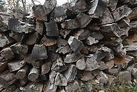 NWA Democrat-Gazette/FLIP PUTTHOFF <br />An ample supply of firewood is always in order when autmn knocks on winter's door.