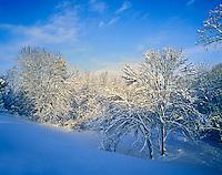Record snow in Louisville, Kentucky.