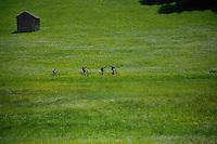 Cycling through Alpine farmland passing cattle shelter. Imst district, Tyrol, Tirol, Austria