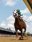 St. Louie Guy (no. 7), ridden by David Cohen and trained by Robertino Diodoro, wins Race 2 July 28 at Saratoga Racecource, Saratoga Springs, NY.  (Bruce Dudek/Eclipse Sportswire)