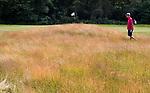 GROESBEEK - Rood Zwenkgras. zoeken naar de bal in het hoge gras. Golfbaan Het Rijk van Nijmegen. COPYRIGHT  KOEN SUYK