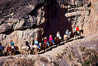 Mule train on Bright Angel Trail, Grand Canyon National Park, Arizona