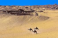 Men on camels, Nubian village near Aswan, Egypt