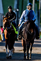 LOUISVILLE, KENTUCKY - MAY 01: Trainer Steve Asmussen leads Hence, owned by Calumet Farm and trained by Steve Asmussen, to the track before exercising in preparation for the Kentucky Derby during Kentucky Derby and Oaks preparations at Churchill Downs on May 1, 2017 in Louisville, Kentucky. (Photo by Scott Serio/Eclipse Sportswire/Getty Images)