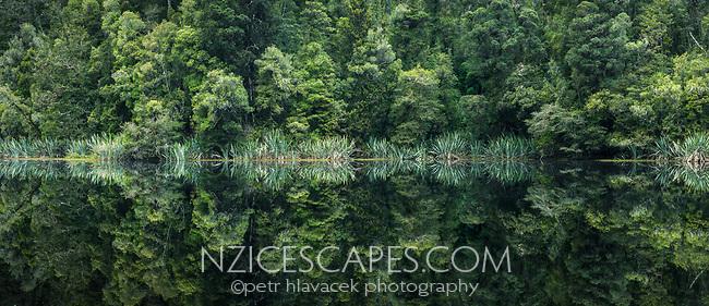 Rainforest reflections in Lake Mathseon, Westland Tai Poutini National Park, UNESCO World Heritage Area, West Coast, New Zealand, NZ