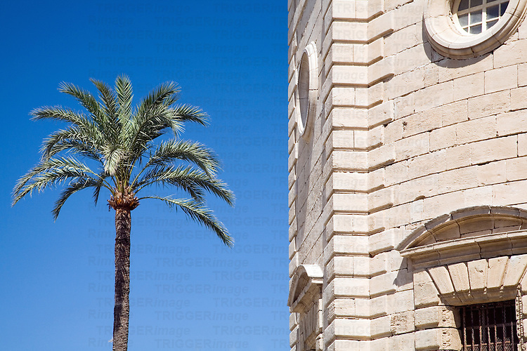 Graphic, simple image of a palm tree and a portion of Cadiz Cathedral facade.