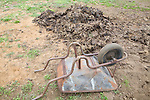 Wheelbarrow next to pile of pig dung being used for garden fertiliser