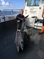 "Pictured: Andrew Alsop with the giant tuna he caught off the Pembrokeshre coast, Wales, UK.<br /> Re: What is thought to be one of the biggest fish ever landed from the sea in Wales was caught in Pembrokeshire waters.<br /> A magnificent blue fin tuna, weighing in at 504 pounds and measuring seven feet seven inches was brought on board the White Water charter craft, operating out of Neyland, while on a shark fishing expedition in the Celtic Deep, 45 miles out to sea.<br /> Skipper Andrew Alsop fought the powerful giant for two hours and 15 minutes as the tuna towed the boat for two-and-half miles.<br /> Describing it as ""the fish of a lifetime"", Andrew, aged 48, said: ""We've had Welsh shark fishing records off the boat, but this was actually the first time, in 20 years, that I was both the skipper and the angler.""<br /> Saundersfoot commercial fisherman Gavin Davies had chartered the boat for a day's shark fishing trip with his crew members Tom Watkins, Chris Watkins and Andrew Jones and friends Arno Tiesing and Dorian Thomas.<br /> When it was suspected that the tuna could be on the end of a line, Andrew passed over the controls of the boat to Gavin and took the rod for the battle of his life.<br /> ""I really didn't think we had any chance in a million years of holding it on the tackle,"" he admitted. ""But it really was a day that was meant to be as I was able to let Gavin take over the controls.<br /> ""At one stage I thought 'I can't do this' - the fish was pinwheeling and fighting. But I had to land it, or it would just have been another fisherman's tale.<br /> ""I knew it would be big, but when it eventually came up it was even more massive than I thought. It took six of us to get it on board. We made sure we had plenty of photos then put him back in the water - he was pretty tired but hopefully he would be ok.<br /> ""It was an absolutely mad day, to be honest, and I'm aching all over this morning!""<br /> Added Gavin: ""I'd gone with the boys for a day out shark fishing, but we never expected this. I've never seen anything like i"