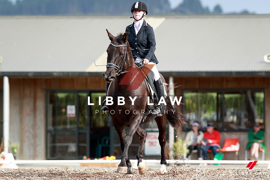NZL-Chontelle Honour rides Tama Park Bradman in class 3A: Level 2 Test 2A - Section A. 2017 NZL-Cushionride Auckland Manukau Regional Dressage Championships. Shirley Watts Memorial Festival of Dressage. Clevedon. Auckland. Friday 20 January. Copyright Photo: Libby Law Photography