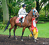 Opio before The Fegentri Amateur Riders Club of America Race at Delaware Park on 10/3/15