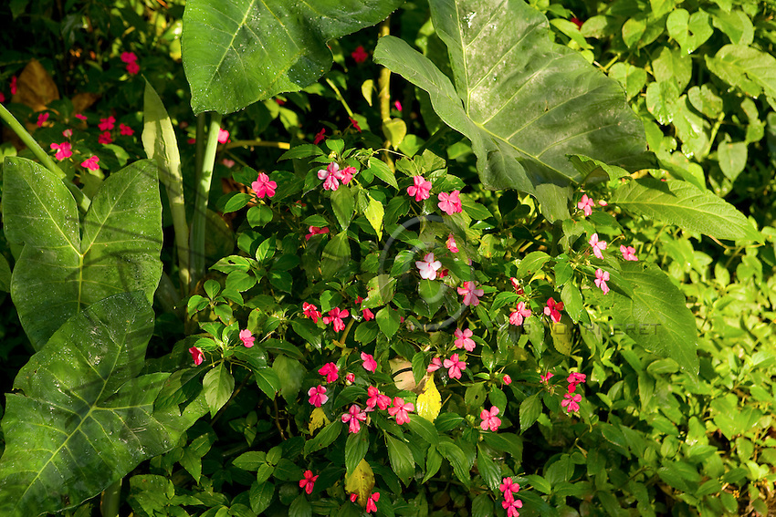 Tosepan's forest management favors biodiversity and conserves the hedges and embankments that shelter a flora rich in flowers during several months of the year.