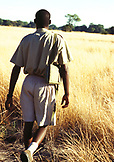 BOTSWANA, Africa, Okavango Delta, a man walking through the grasslands to his village