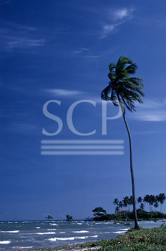 Itaparica Island, Bahia, Penha; line of slim palm trees with choppy seawater and a single palm tree in the foreground.