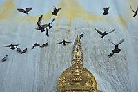 Pigeons at Pasuati Nath Buddhist Monkey Temple, Kathmandu, Nepal