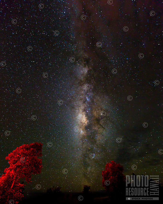 Red-lit 'ohi'a trees seem to point to the Milky Way in a beautiful starry night sky over the Big Island.