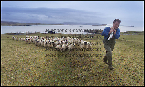 Skye crofter Dennis Munro leads his flock to feeding on his croft at Feorlig  ....  Pic Donald MacLeod
