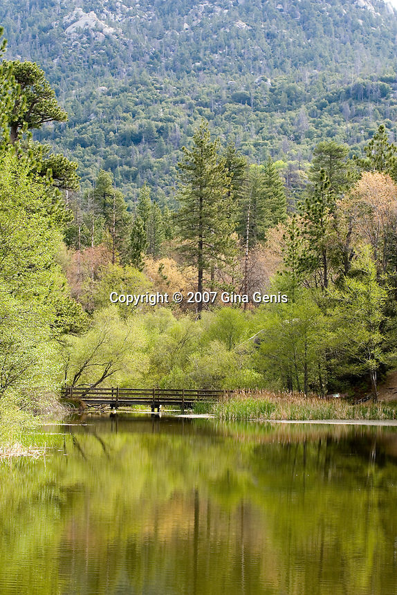 New leaves emerging around Lake Fulmor in the San Jacinto mountains of Southern California