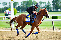 ELMONT, NY - JUNE 08:  Justify gallops around the track as horses prepare on Friday for the 150th running of the Belmont Stakes at Belmont Park on June 8, 2018 in Elmont, New York. (Photo by Kaz Ishida/Eclipse Sportswire/Getty Images)